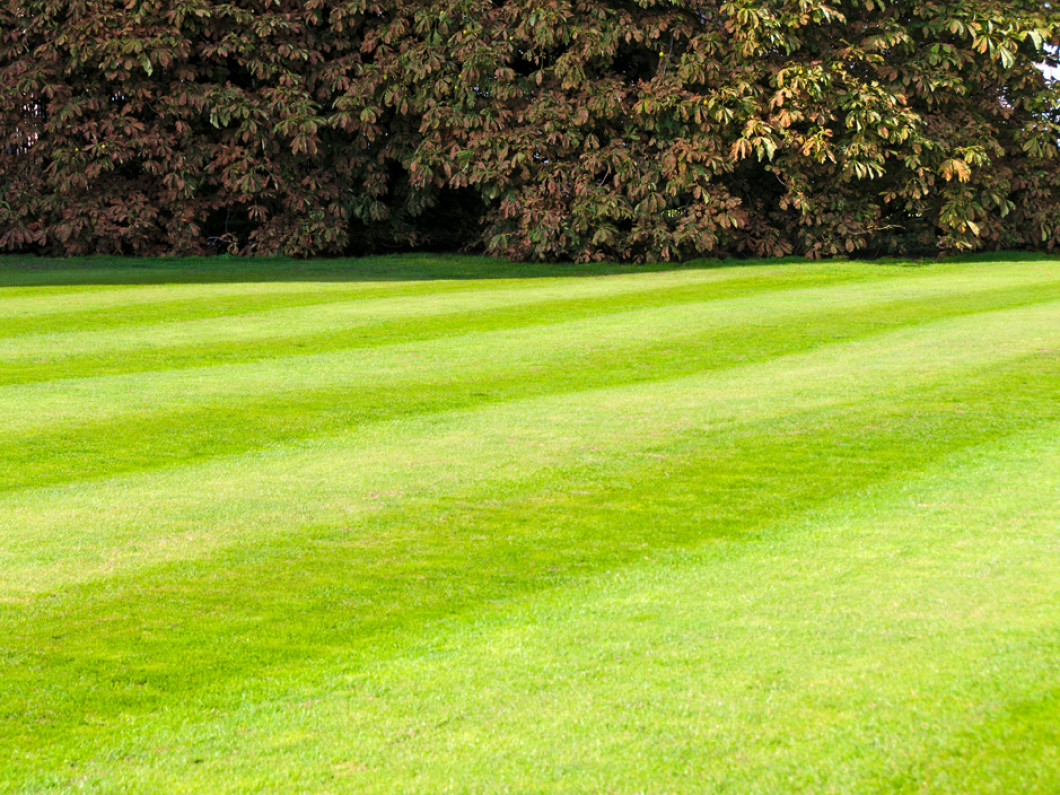 Lawn Maintenance in Tallahassee, FL